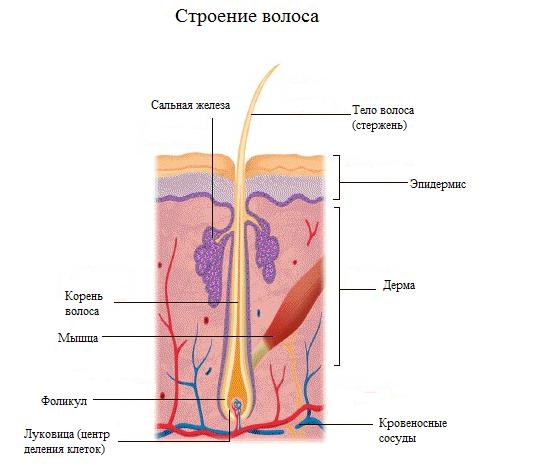 паразиты в коже головы